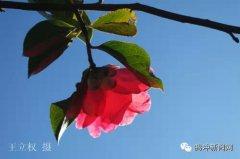 腾冲和睦 有一种花开叫幸福!