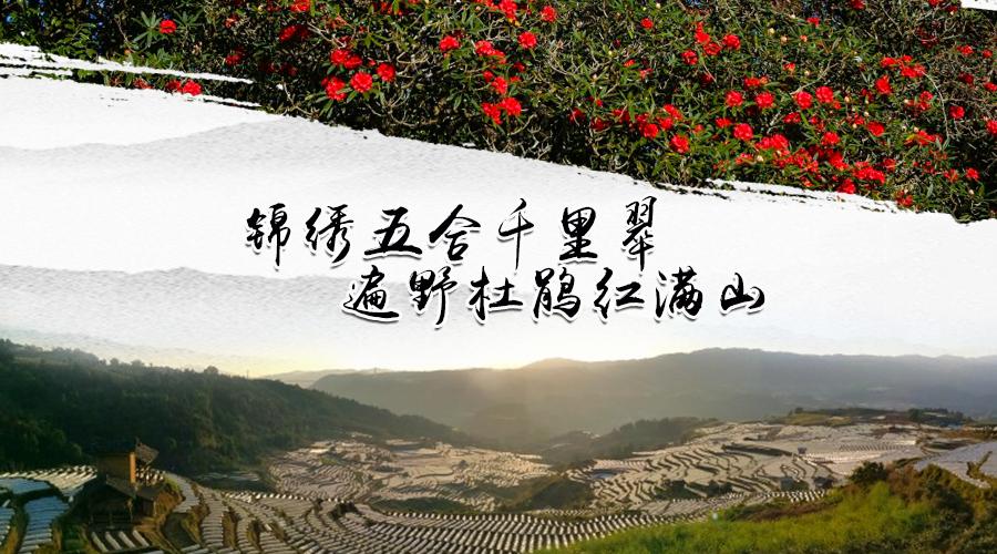 锦绣五合千里翠,遍野杜鹃红满山